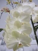 2011台北國際蘭展:IMG_6426_調整大小.JPG