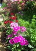菜花園:調整大小103_1625.JPG