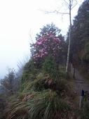 太平山翠峰湖山毛櫸步道:調整大小100_0902.JPG