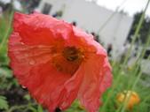 花博--春之花頌:IMG_6813_調整大小.JPG