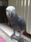 鳥:調整大小20081023125.jpg