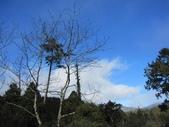 三個媽媽太平山翠峰湖之行:IMG_3055.JPG
