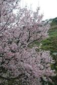 100之櫻花:DSC_0170.JPG