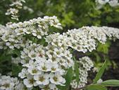 花園:IMG_8275