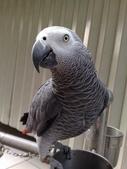 鳥:調整大小20081023132.jpg