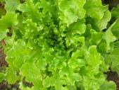 99-----菜花園:IMG_4618_調整大小