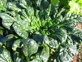 99-----菜花園:IMG_3142_調整大小