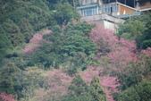 竹子湖:DSC_0098_調整大小_調整大小.JPG