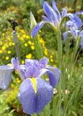 花球&草花:調整大小200903241132.jpg