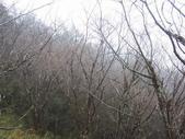 太平山翠峰湖山毛櫸步道:調整大小100_0799.JPG