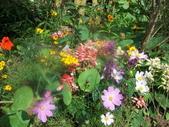 菜花園:調整大小103_1615.JPG
