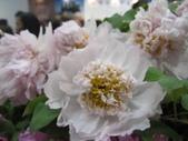 花博--春之花頌:IMG_7294_調整大小.JPG