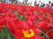 花博--春之花頌:IMG_4809.JPG