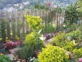 菜花園:調整大小103_1638.JPG