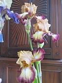 花見:IMG_9855