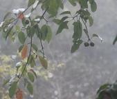 雪見森林遊憩區:DSC_0237.JPG