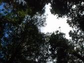 太平山&見晴古道:調整大小DSC_0748.JPG