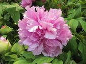 花博--春之花頌:IMG_7264_調整大小.JPG