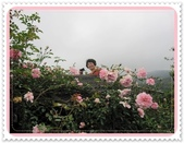 2011玫瑰:IMG_0800_調整大小.JPG