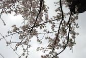 竹子湖:DSC_0095_調整大小_調整大小.JPG