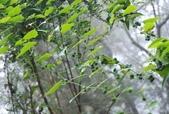 雪見森林遊憩區:DSC_0368.JPG