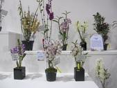 2011台北國際蘭展:IMG_6393_調整大小.JPG
