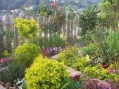 菜花園:調整大小103_1637.JPG