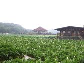 竹子湖:複製 -102_2360_調整大小.JPG