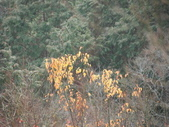太平山&見晴古道:調整大小DSC_0799.JPG