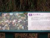 太平山翠峰湖山毛櫸步道:調整大小100_0789.JPG