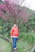 竹子湖:DSC_0073_調整大小_調整大小.JPG