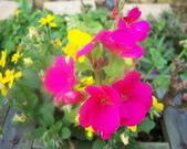 菜花園:調整大小103_1630.JPG