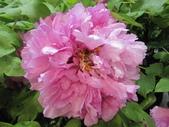 花博--春之花頌:IMG_7254_調整大小.JPG