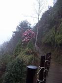 太平山翠峰湖山毛櫸步道:調整大小100_0901.JPG