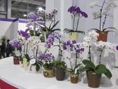 2011台北國際蘭展:IMG_6251_調整大小.JPG