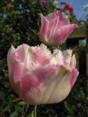 99-----菜花園:IMG_4519_調整大小