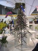 2011台北國際蘭展:IMG_6320_調整大小.JPG