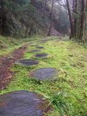 太平山翠峰湖山毛櫸步道:調整大小100_0732.JPG