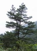 九份-金瓜石-貂山古道:調整大小照片 110.jpg