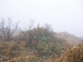 太平山翠峰湖山毛櫸步道:調整大小100_0806.JPG