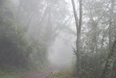 雪見森林遊憩區:DSC_0360.JPG