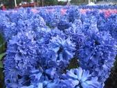 花博--春之花頌:IMG_4727.JPG
