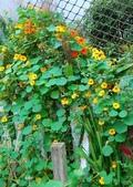 2011菜花園:DSC_0050.JPG