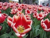 花博--春之花頌:IMG_4822.JPG