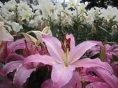 花博--春之花頌:IMG_5839.JPG