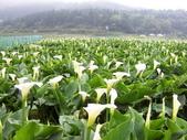 竹子湖:複製 -102_2364_調整大小.JPG