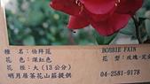 99新社花海:IMG_8773.JPG