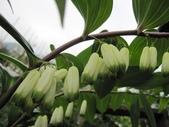 2011菜花園:IMG_8772.JPG