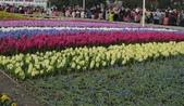 花博--春之花頌:IMG_4720.JPG
