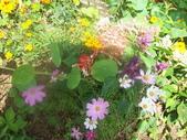 菜花園:調整大小103_1614.JPG